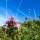 Duftölkonzentrat für Raumbeduftung, Alpen Kräuter 1l