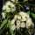 Duftölkonzentrat für Raumbeduftung, Eukalyptus 1l